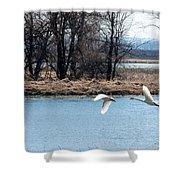Tundra Swan Flight Shower Curtain