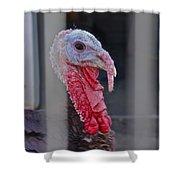 Turkey 1 Shower Curtain