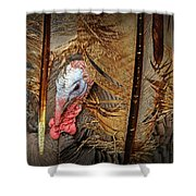 Turkey And Feathers Shower Curtain