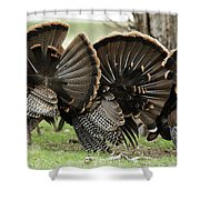 Turkey Butt Strut Shower Curtain