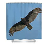 Turkey Buzzard 1 Shower Curtain