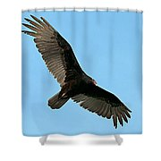 Turkey Buzzard 2 Shower Curtain