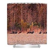 8964 - Turkey - Eastern Wild Turkey Shower Curtain
