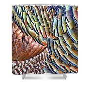 Turkey Feather Colors Shower Curtain