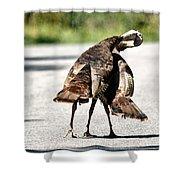 Turkey Fight Shower Curtain
