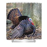 Turkey Gobbler Strut Shower Curtain