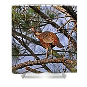 Turkey In A Tree Shower Curtain
