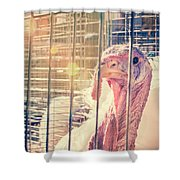 Turkey In The Cage Shower Curtain
