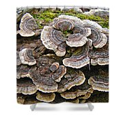 Turkey Tail Bracket Fungi -  Trametes Versicolor Shower Curtain