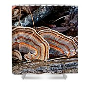Turkey Tail Fungi In Autumn Shower Curtain