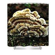 Turkey Tail Fungi Shower Curtain