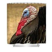 Turkey Time Shower Curtain by Carolyn Marshall