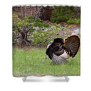 Turkey Trot Shower Curtain