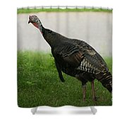 Turkey Trot Shower Curtain