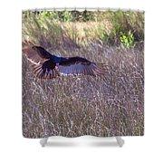 Turkey Vulture 2 Shower Curtain