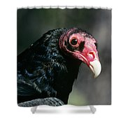 Turkey Vulture Cathartes Aura South Shower Curtain