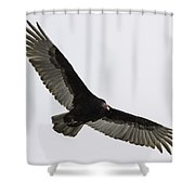 Turkey Vulture In Flight Shower Curtain by Thomas Young