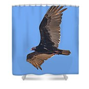 Turkey Vulture Soaring Overhead Drb153 Shower Curtain