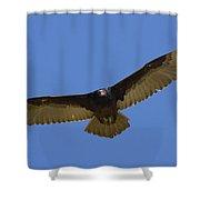 Turkey Vulture Soaring Overhead Shower Curtain