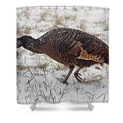 Turkey With Apple Stuffing Shower Curtain