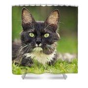 Turkish Angora Cat Shower Curtain