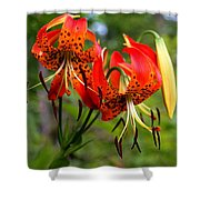 Turkish Cap Lily  Shower Curtain