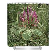 Turkish Rose Clover Shower Curtain