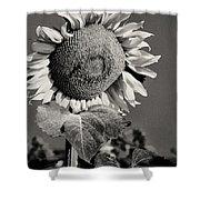 Turkish Sunflower 3 Shower Curtain