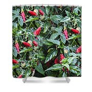 Turks Cap And Rain Drops Shower Curtain