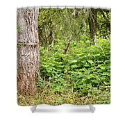 Turk's Cap And Tree Shower Curtain