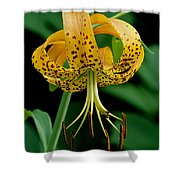 Turk's Cap Lilly Shower Curtain