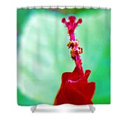 Turks Cap With Visitors Shower Curtain