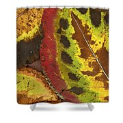Turning Leaves 3 Shower Curtain
