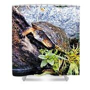 Turtle 1 Shower Curtain