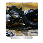 Turtle And Gator Love I Shower Curtain