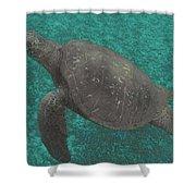 Turtle Ascending Shower Curtain