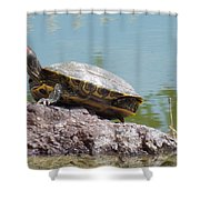 Turtle At The Lake Shower Curtain