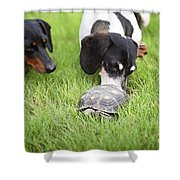 Turtle Chase Shower Curtain