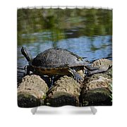 Turtle Float Shower Curtain