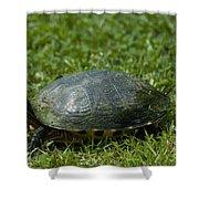 Turtle Grass Shower Curtain