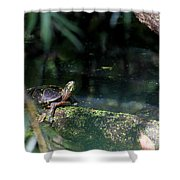 Turtle Grotto Shower Curtain