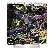 Turtle In The Glades Shower Curtain