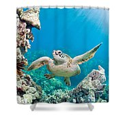 Turtle In Tropical Ocean Shower Curtain
