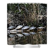 Turtle Lineup Shower Curtain