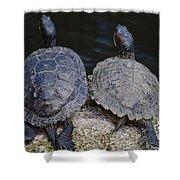 Turtle Love Shower Curtain