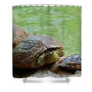 Turtle Ninjas Shower Curtain