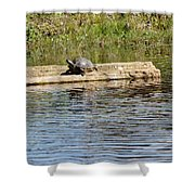 Turtle Raft Shower Curtain