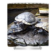 Turtle Rant Shower Curtain