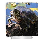 Turtle Smile Shower Curtain