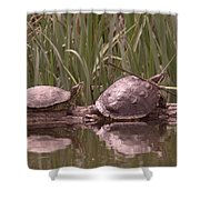 Turtle Struggling To Rest On A Log With Its Buddy Shower Curtain